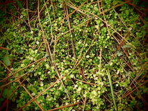 Forest Carpet. Natural carpet in the deep forest Royalty Free Stock Photography