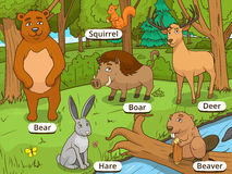 Forest cartoon animals with names vector Royalty Free Stock Image