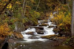Forest Cascade Royalty Free Stock Photo