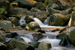 Forest Cascade Royalty Free Stock Photos