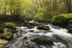 Forest Cascade Stock Photography
