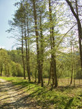Forest in Catalonia(Spain) Trees and grass detail royalty free stock image
