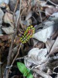 Forest caterpillar royalty free stock photo