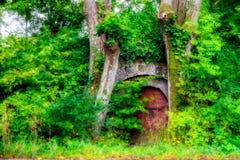 Forest Cellar Arkivfoto