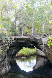 Forest with a cenote at Giron Stock Photo