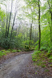 Forest of the center of France Stock Photography