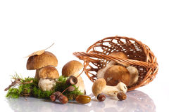 Forest cep Stock Image