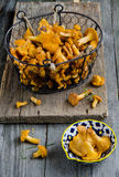 Forest chanterelle mushrooms in a basket Stock Photos