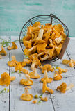 Forest chanterelle mushrooms in a basket Royalty Free Stock Photography