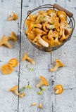 Forest chanterelle mushrooms in a basket Royalty Free Stock Images