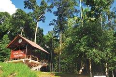 Forest Chemerong immagine stock libera da diritti