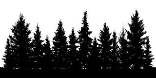 Forest of Christmas fir trees silhouette. Coniferous spruce. Vector on white background Royalty Free Stock Image