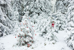 Forest Christmas Tree. Decorated Christmas tree in snow-covered pine forest Royalty Free Stock Photos