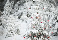 Forest Christmas Tree Stock Image