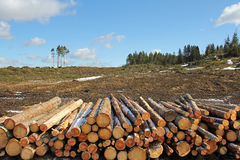 Forest clear cut. With stack of logs on the front. Photographed in Salo, Finland April 2012 royalty free stock photo
