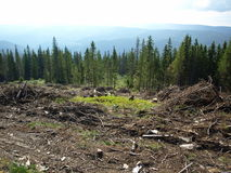 Forest clear cut destruction Royalty Free Stock Images