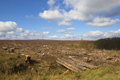 Forest clearance Stock Image