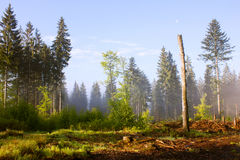 Forest Clearance Royalty Free Stock Photography