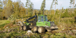 Forest clearing Royalty Free Stock Photos