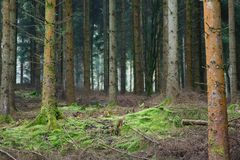 Forest clearing Royalty Free Stock Photo