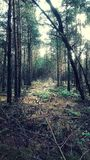Forest clearing. In autumn Stock Image