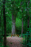 Forest clearing Stock Photography