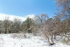 Forest Clearing com árvores geladas fotografia de stock