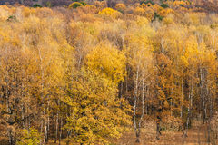 Forest clearing on the edge of woods in autumn Stock Photos