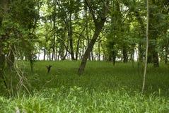Forest Clearing em um fundo do rio Foto de Stock Royalty Free