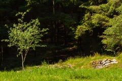 Forest Clearing Floresta de Glenashdale, Arran, Escócia imagens de stock royalty free