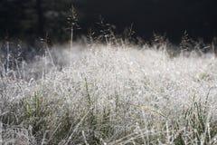 Forest Clearing gelado - jaspe, Canadá fotos de stock