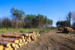 Forest Clearing, Pile Of Logs Laid. Stock Photo