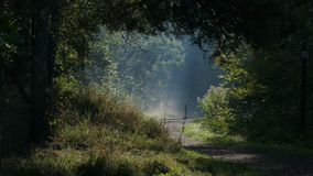 Forest clearing.They shine in the early morning. Poland stock image