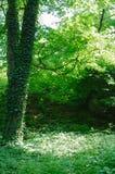 Forest Clearing verde Fotos de archivo libres de regalías