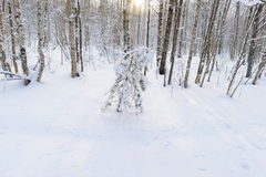 Forest clearing in the white snow with shadows on a winter morning sun Stock Images
