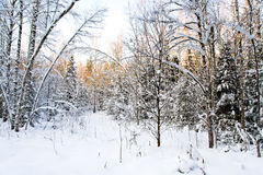 Forest clearing in winter Stock Photos