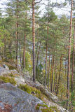 Forest on a cliff Royalty Free Stock Photography
