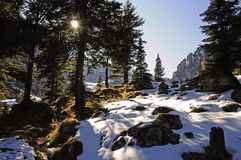 Forest and clifs near Malaiesti Royalty Free Stock Images