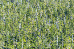 Forest in the Climate Change Royalty Free Stock Image