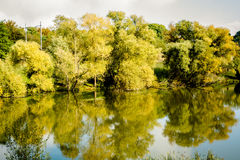 Forest close to a lake. Tree forest close to a lake with Autumn colours Stock Images