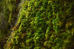 Forest closeup moss and trees Stock Image