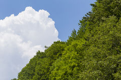 Forest and cloud Stock Images