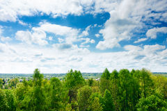 Forest in clouds Stock Photography