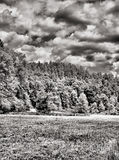 Forest and clouds in black and white Stock Photos