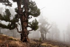 Forest in the clouds, La Palma, Canary islands Stock Image