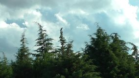 Forest and Clouds Time Lapse. Video stock video footage