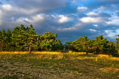 Forest and cloudscape. Scenic view of track through sunlit forest under cloudscape Stock Photo