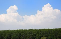 Forest with cloudy sky. Background Royalty Free Stock Photo