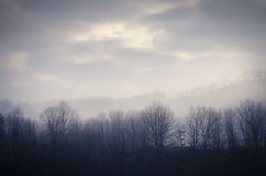 Forest in cold autumn morning Stock Image
