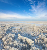 Forest during cold winter day stock image